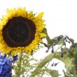 Sunflower in bouqet — Stock Photo #11114035