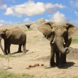 Elephants on the way to a water hole - Stock Photo