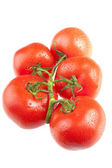 Fresh tomato's on white — Stock Photo