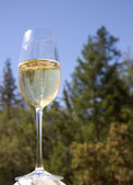 Sparkling wine in a glass bathed in sunshine and poised to drink — Stock Photo