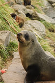 Sea lion colony — Stock Photo