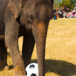 Stock Photo: Elephant Playing Soccer Ball Grass Field