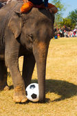 Elephant Playing Soccer Ball Grass Field — Stock Photo