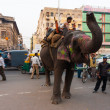 Downtown Delhi Traffic Elephant Cause India — Stock Photo