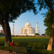 Stock Photo: Taj Mahal Trees Footpath Green Bushes Framed V