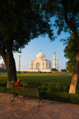 Taj Mahal Trees Footpath Green Bushes Framed V — Stock Photo