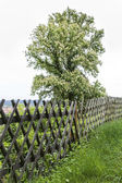 Tree at the Fence — Stock Photo