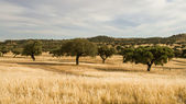 Corktree landscape in south Portugal — Stock Photo