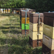 Beehives in a Danish meadow — Stock Photo