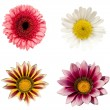 Royalty-Free Stock Photo: A collage of four flowers