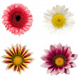 A collage of four flowers — Stock Photo