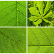 Collection green leaves — Foto de Stock