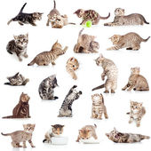 Collection of funny playful cat kitten isolated on white backgro — Stock Photo