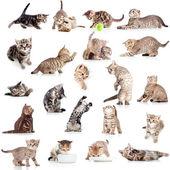 Beyaz backgro izole komik oyun oynayan kedi kedi koleksiyonu — Stok fotoğraf