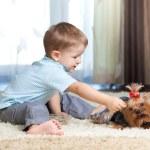 Cute kid feeding pet dog york — Stock Photo
