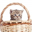Funny small kitten in wicker basket — 图库照片