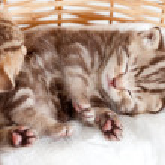 Funny sleeping baby cat kitten in wicker basket — Stock Photo