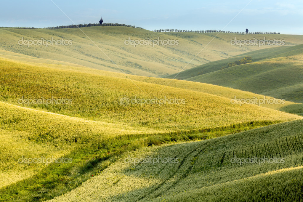 Scenic view on the green fields and rolling hills of Tuscany near Pienza Italy  Stock Photo #11457512