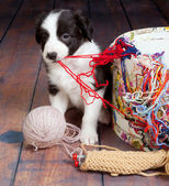 Messy puppy — Stock Photo