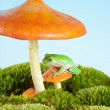 Frog on mushroom — Stock Photo