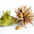 Hazelnuts — Stock Photo