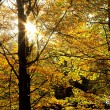 Sunlit leaves — Stock Photo