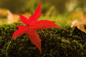 Autumn reds — Stock Photo