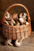 Fungi in a basket — Foto de Stock
