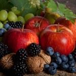 Autumn berries — Stock Photo #12242565