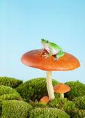 Raganella su toadstool — Foto Stock