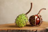 Chestnuts on tree trunk — Stock Photo