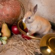 Rabbit and hunting horn - Stock Photo