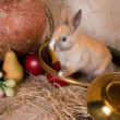 Rabbit and hunting horn — Stock Photo