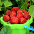 Crop of strawberries — Stock Photo