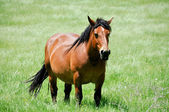 Horse in Valderejo (Basque Country) — Stock Photo