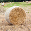 Stock Photo: Hay bails