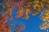 Fall's colorful tree — Stock Photo