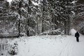 冬の森 — ストック写真