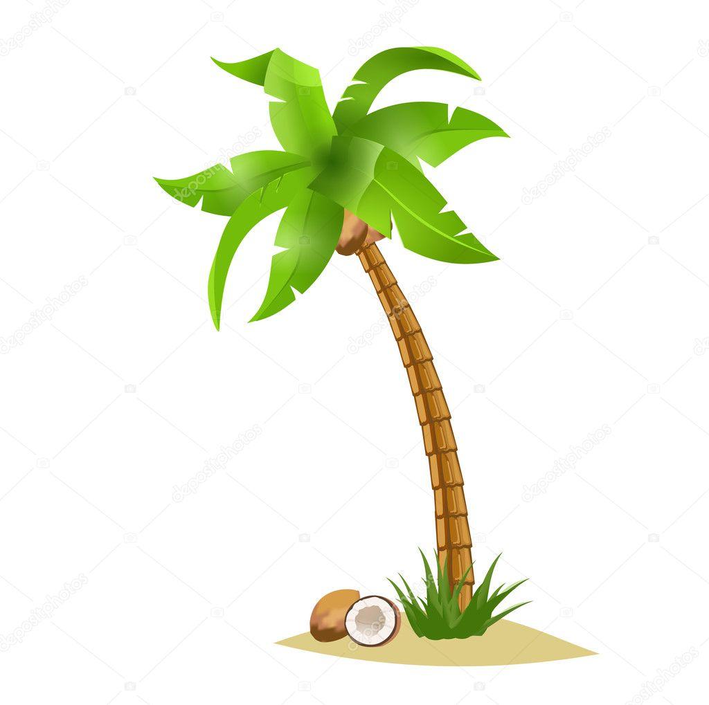 Noix de coco et de palmier image vectorielle 11362811 - Palmier noix de coco ...