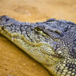 Closeup of crocodile — Stock Photo #11304174