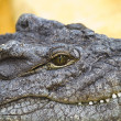 Crocodile resting with eye details — Stock Photo