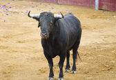 Powerful Spanish bull in a bullfight. Matador in Madrid bullring — Stock Photo