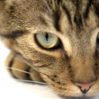 Stock Photo: Cat close-up
