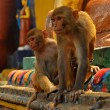 Monkeys in Swaymabhunath (Monkey Temple) in Kathmandu, Nepal — Stock Photo