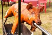 Roasted pig — Stock Photo