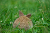 Gray rabbit on a green lawn — Stock Photo