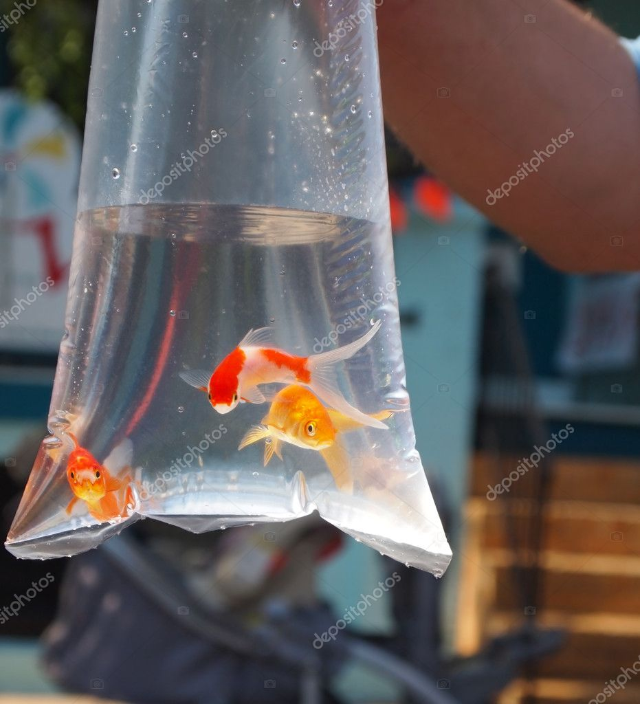 Goldfish prize in bag stock photo duckeesue 11082404 for Prix poisson rouge 20 cm