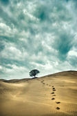 Lonley tree — Stock Photo