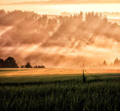 Sun ray and field way — Stock Photo