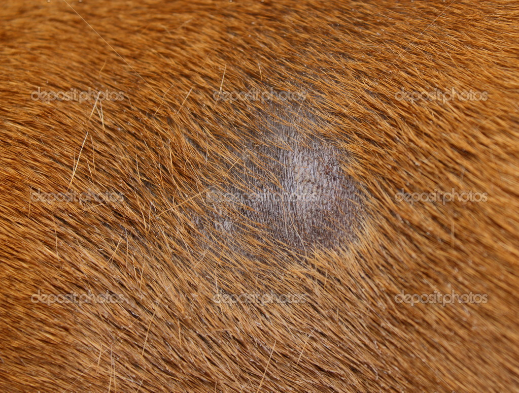 How To Treat Dog Staph Infection At Home